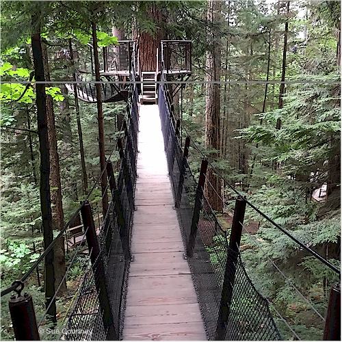 A Treetops Adventure suspension bridge