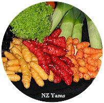 NZ Yams - photo S Courtney